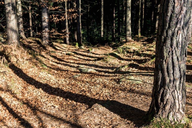 Las sombras de los árboles en la trayectoria fotos de archivo libres de regalías