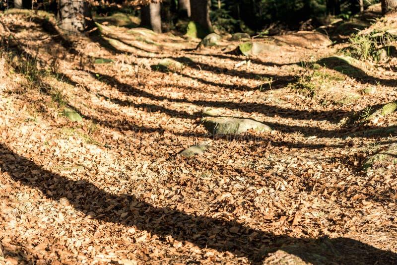Las sombras de los árboles en la trayectoria fotografía de archivo libre de regalías