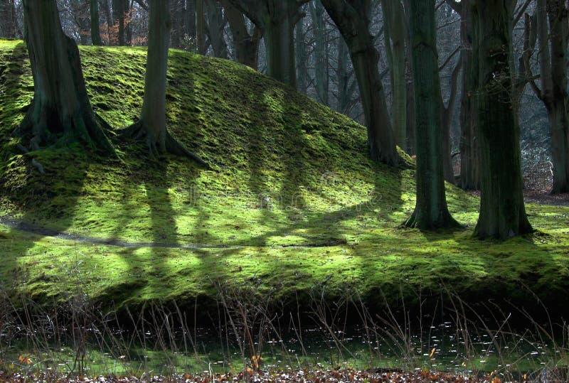 las tło obraz royalty free