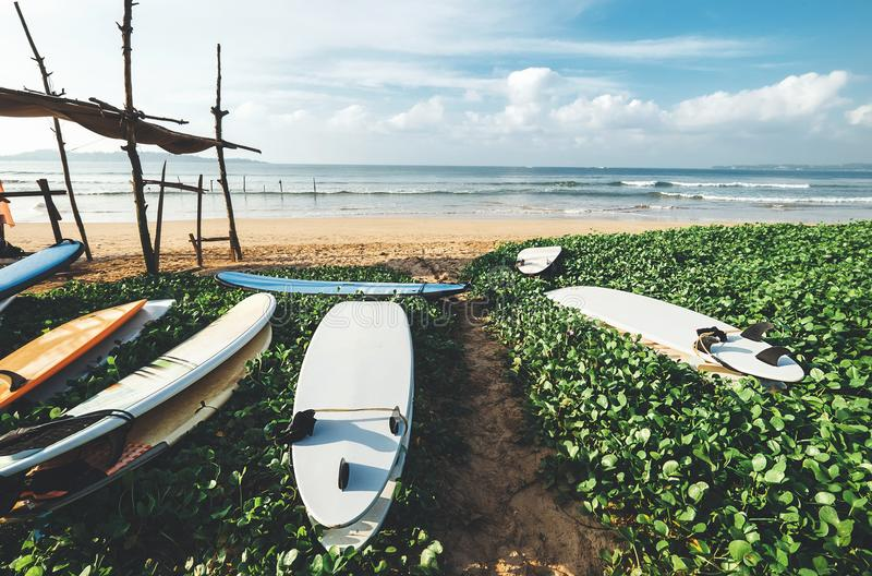 Las tablas hawaianas están en la playa en erly el tiempo de mañana en la resaca poi imagen de archivo