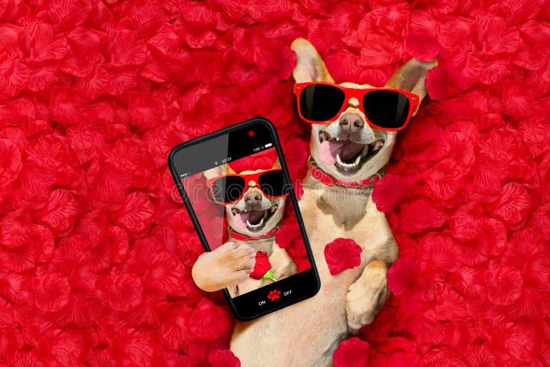 Las tarjetas del día de San Valentín persiguen con los pétalos color de rosa imagenes de archivo