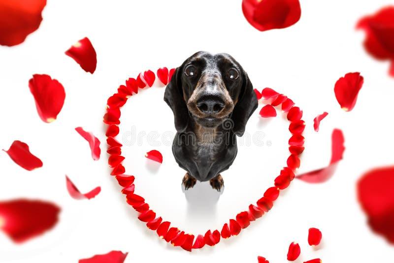 Las tarjetas del día de San Valentín persiguen en amor imagen de archivo libre de regalías