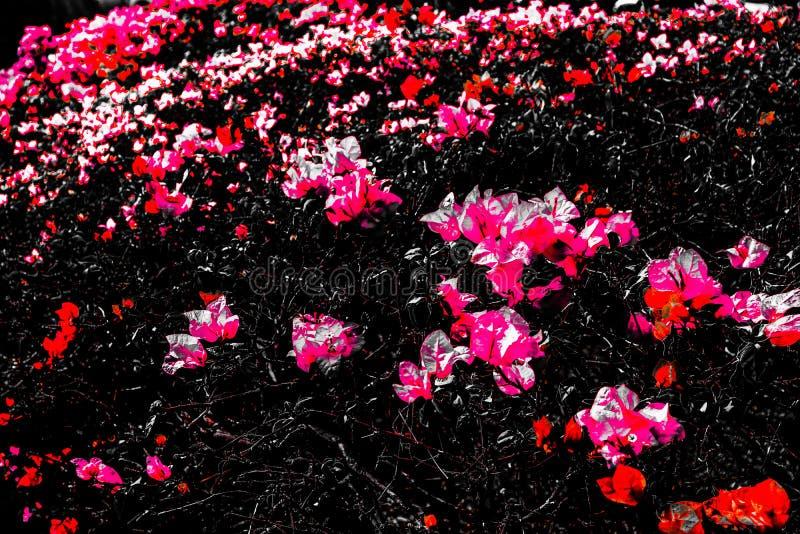 Las texturas abstractas hermosas se cierran encima de las flores púrpuras del color y rosadas rojas en el fondo y el papel pintad imagenes de archivo