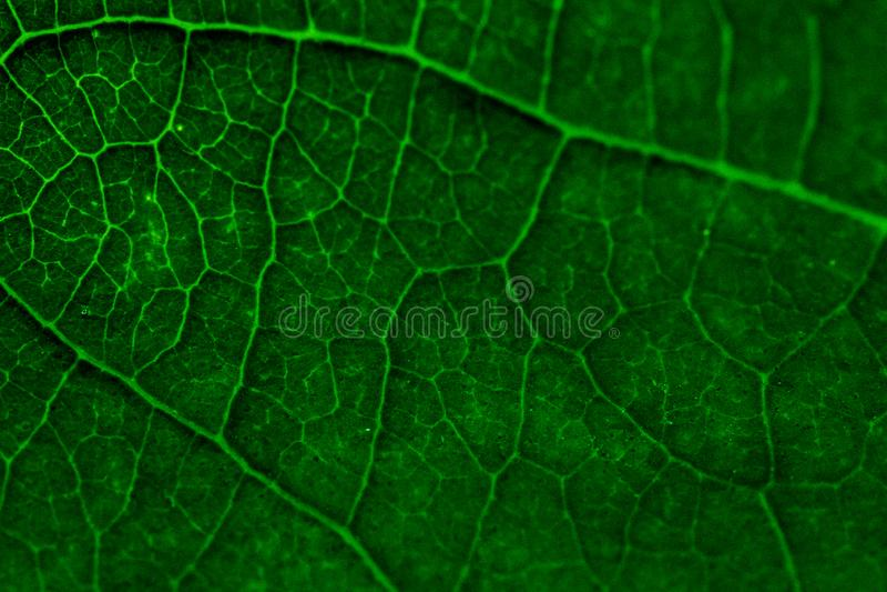 Las texturas coloridas ponen verde el fondo de la hoja Ci?rrese encima de l?nea de la hoja foto de archivo