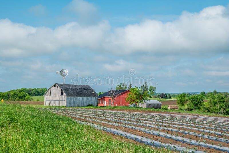 Las tierras de labrantío cultivados para la estación fotografía de archivo