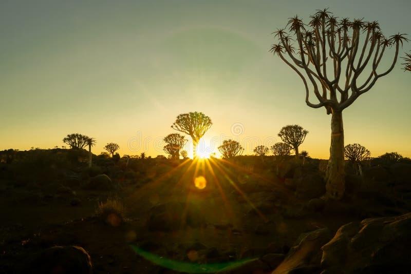 Las tonalidades verdes y de oro como sol suben sobre el terreno accidentado del bosque del árbol del estremecimiento imagen de archivo libre de regalías