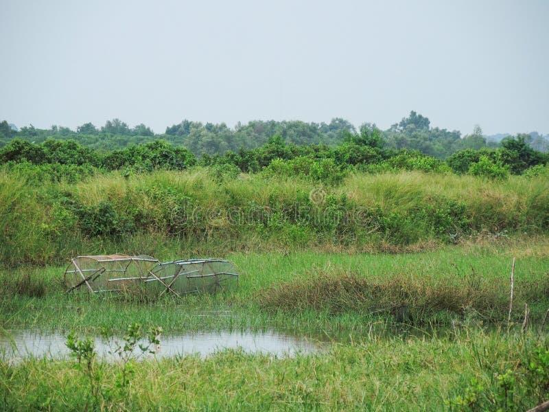 Las trampas de los pescados en un campo de hierba verde cerca de la charca en el tiempo lluvioso sazonan en el campo de Nakhon Si imagen de archivo