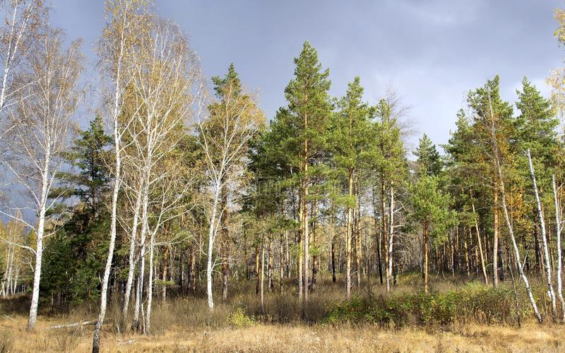 las trochę obraz royalty free