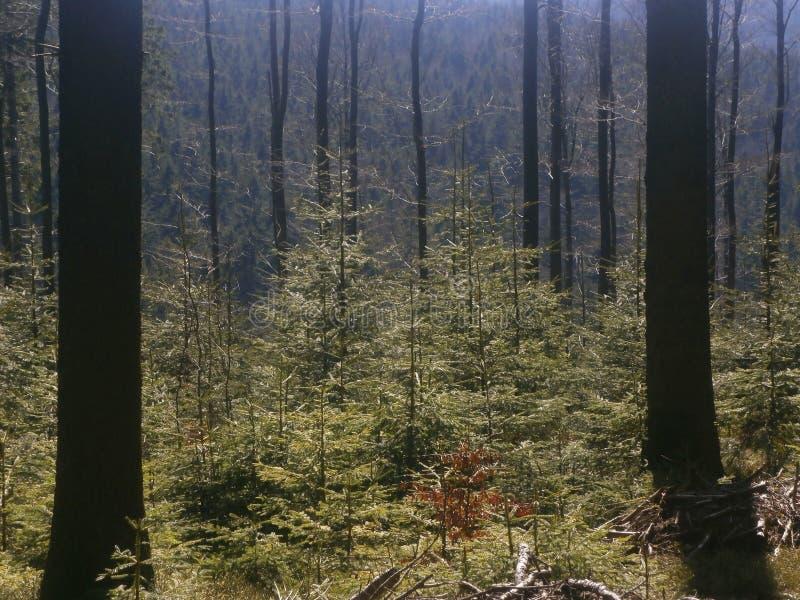 las trochę obrazy stock