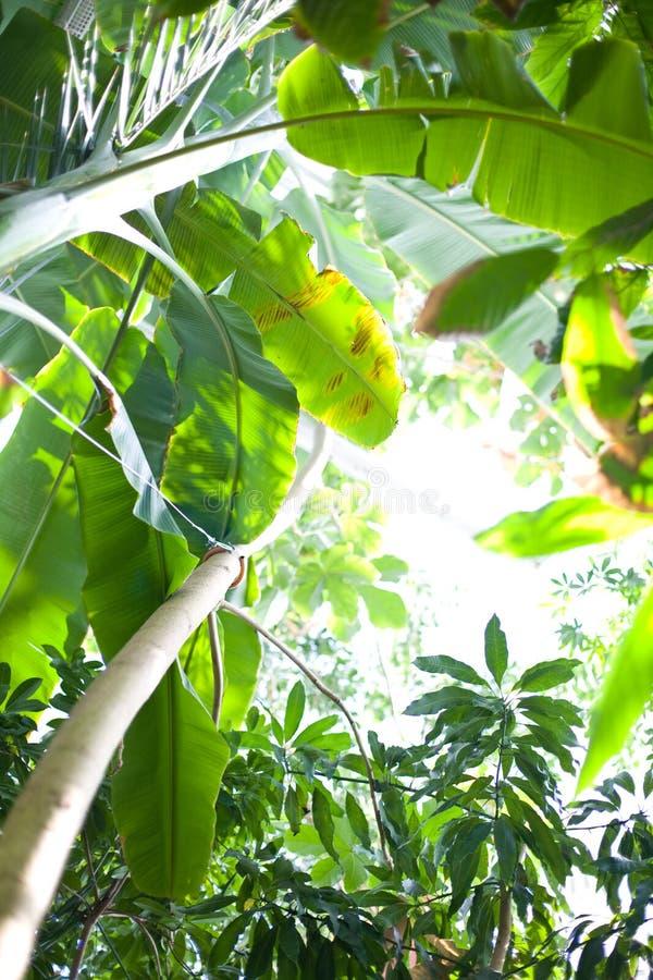 las tropikalny zdjęcia stock