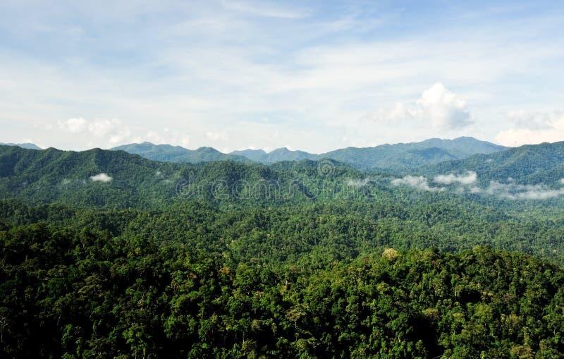 las tropikalny fotografia stock