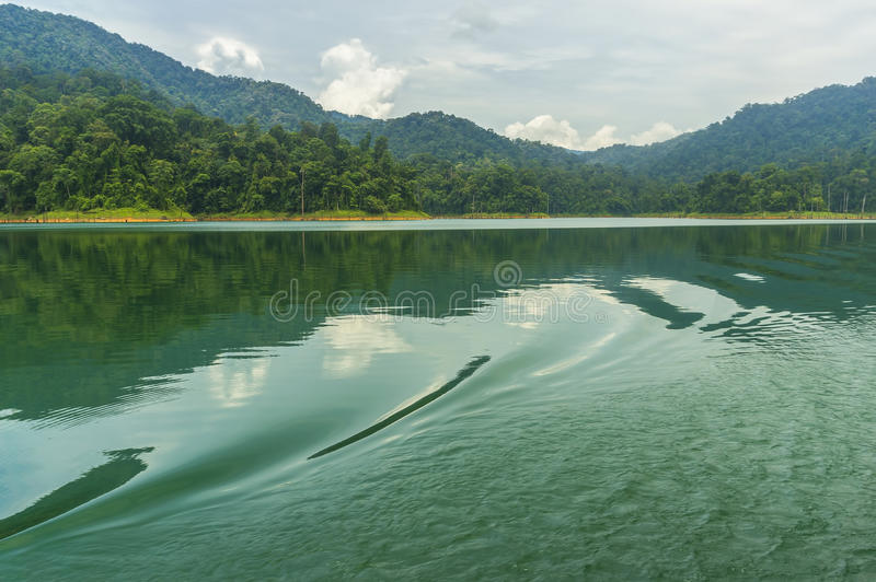 Las tropikalny zdjęcie royalty free