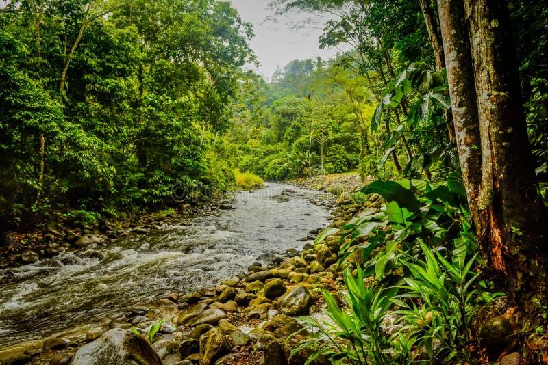 Las Tropikalny dżungli siedlisko w Costa Rica zdjęcie stock