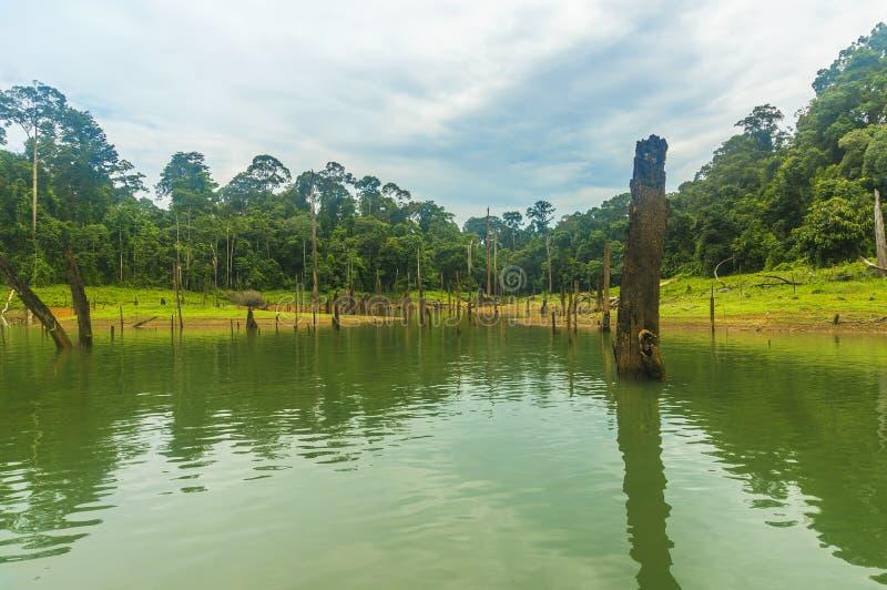 Las tropikalny i nieżywy drzewo obrazy stock