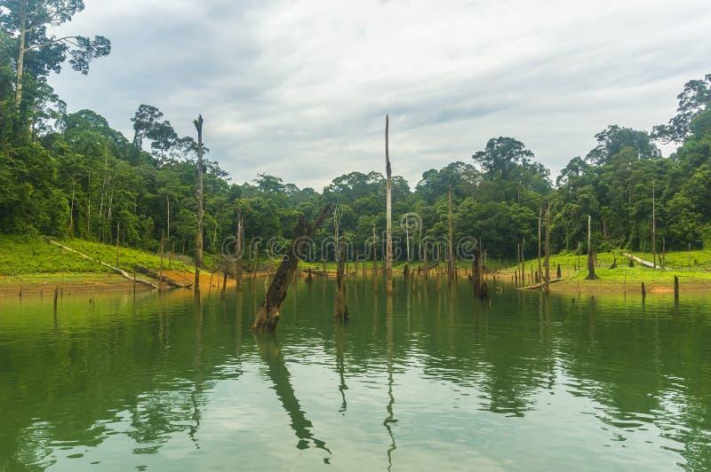 Las tropikalny i nieżywy drzewo zdjęcia stock