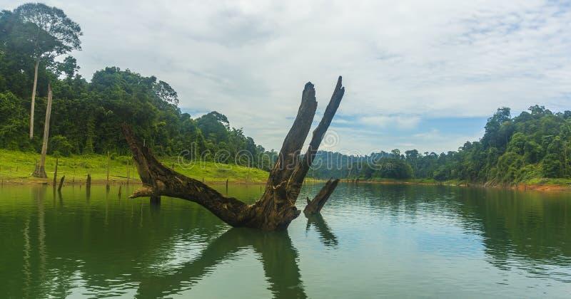 Las tropikalny i nieżywy drzewo obraz royalty free