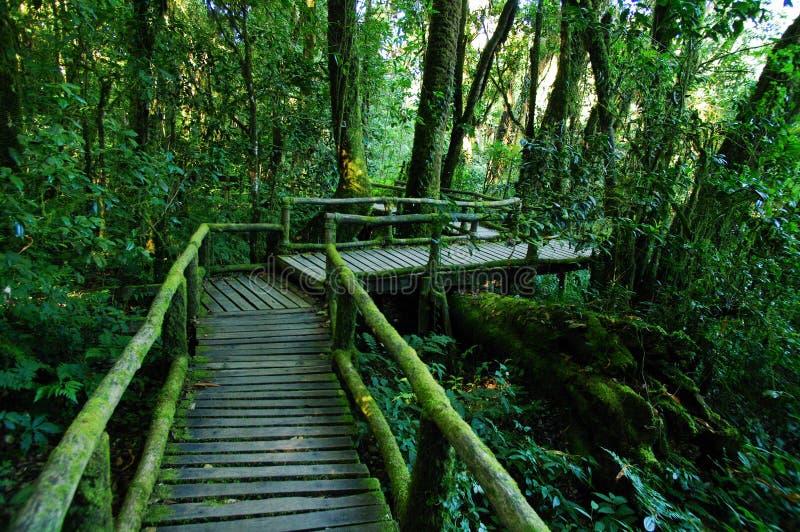 Las tropikalny przy Doi intanon Chiang Mai obraz royalty free