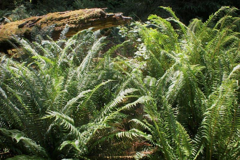 Las tropikalny roślinność obrazy royalty free