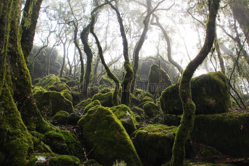 Las tropikalny scena obrazy royalty free