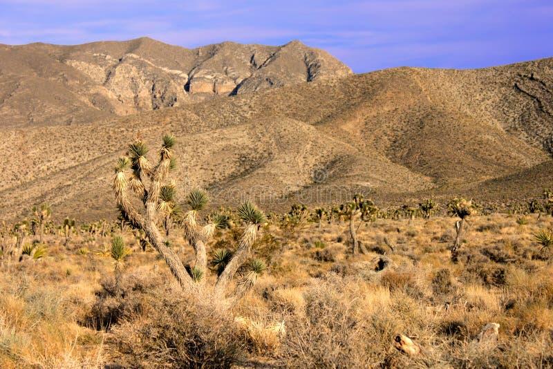 Las Vegas ökenlandskap arkivbilder