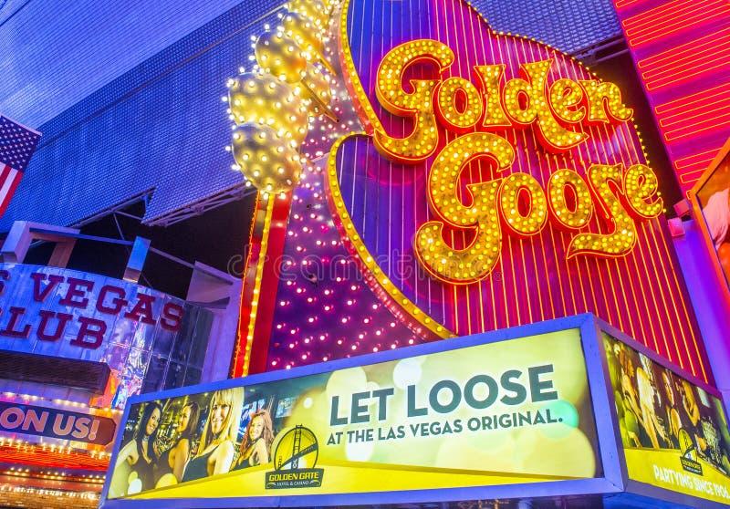 Las Vegas guld- gås royaltyfri fotografi