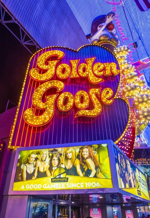 Las Vegas guld- gås royaltyfria foton