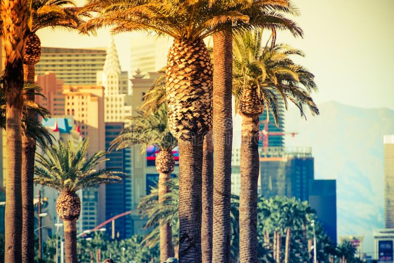 Las Vegas Strip Palms royalty free stock photography