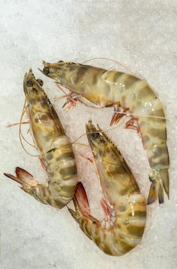 Las ventas de los pescados contradicen imagenes de archivo