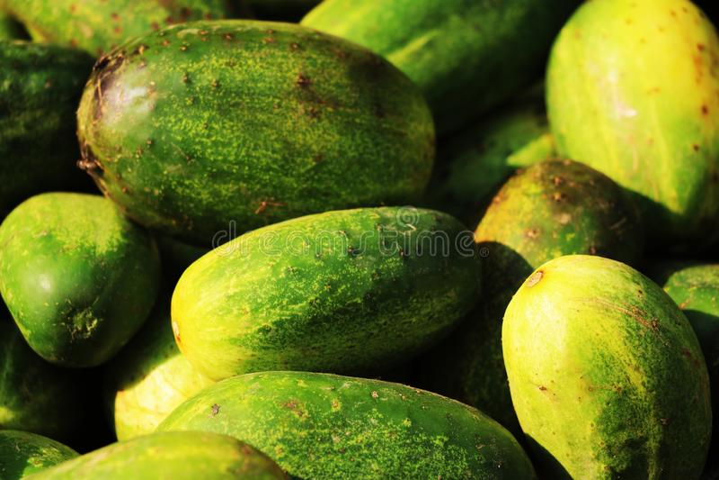 Las verduras de los pepinos utilizaron como verdura de ensalada foto de archivo