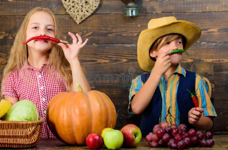 Las verduras del muchacho de la muchacha de los granjeros de los ni?os cosechan la granja de la familia Ni?os que presentan a cos foto de archivo