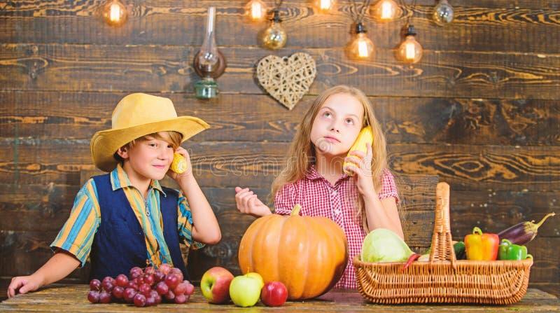 Las verduras del muchacho de la muchacha de los granjeros de los ni?os cosechan los ni?os que presentan a cosecha de la granja el foto de archivo libre de regalías