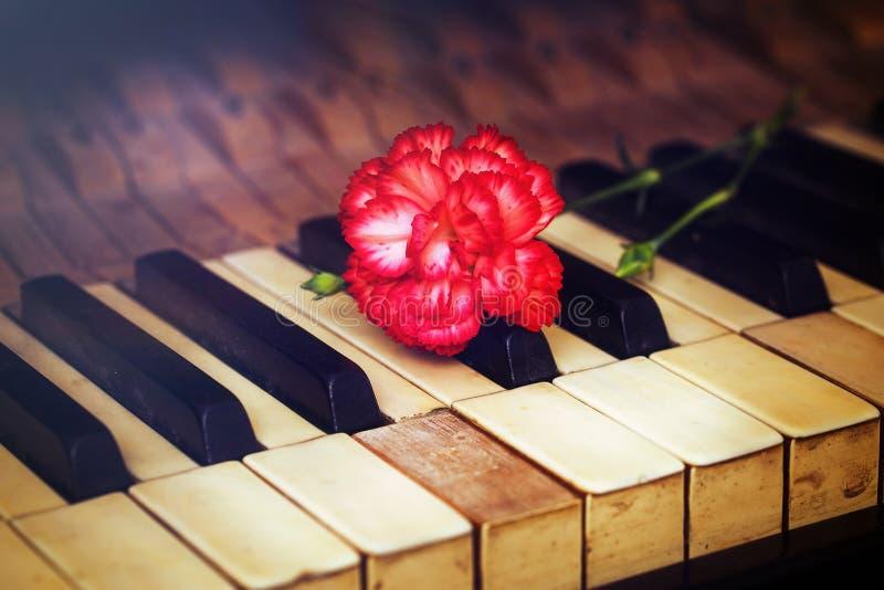 Las viejas llaves del piano del gand del vintage con un clavel rojo florecen, imagen del vintage Concepto de la música fotografía de archivo libre de regalías