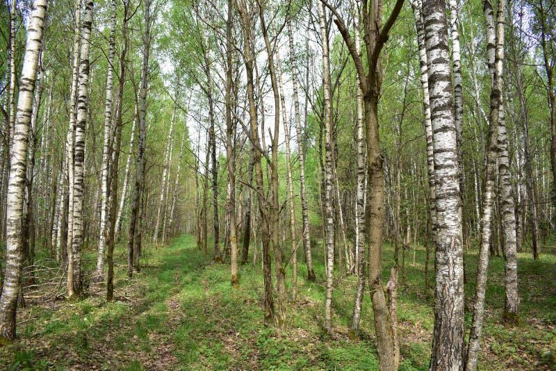 Las, właśnie basztowy malować, purpura, złoto, szkarłat, Jest na Pogodnej haliźnie zdjęcia royalty free