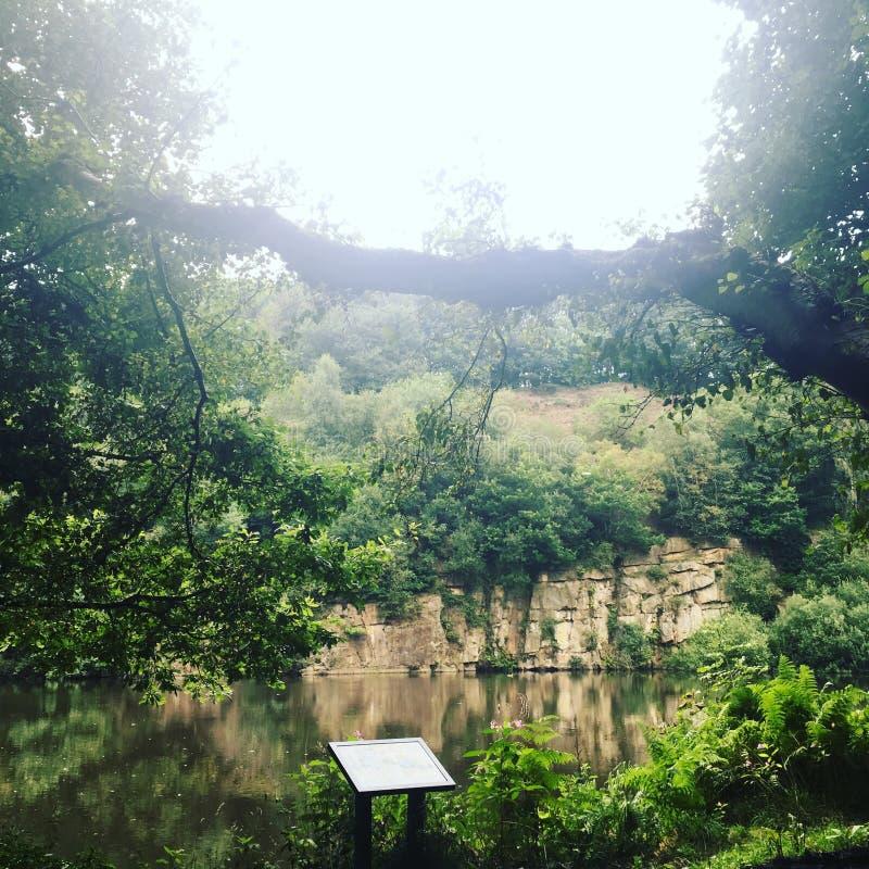 Las w Bolton obraz royalty free