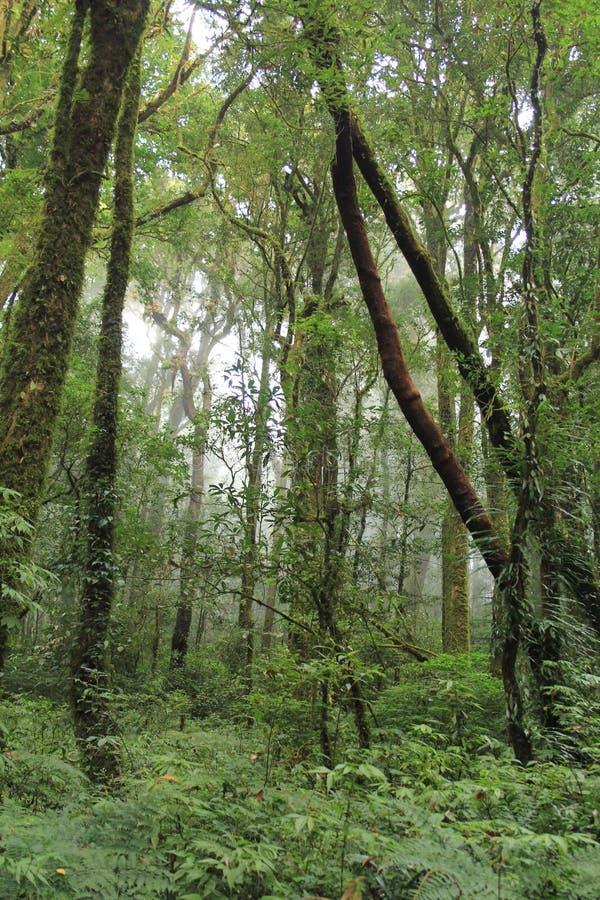 Las w Chiangmai obrazy royalty free