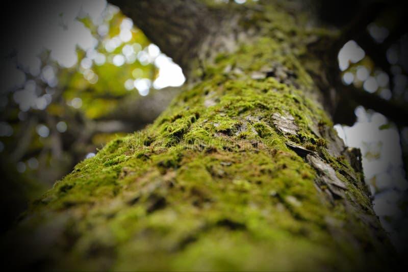 Las w jesieni zdjęcie royalty free