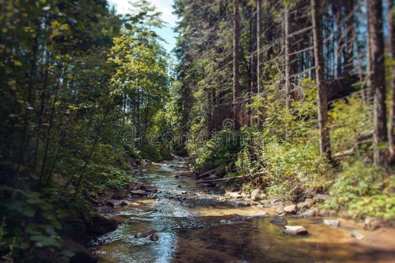 Las w Karpackich górach fotografia royalty free