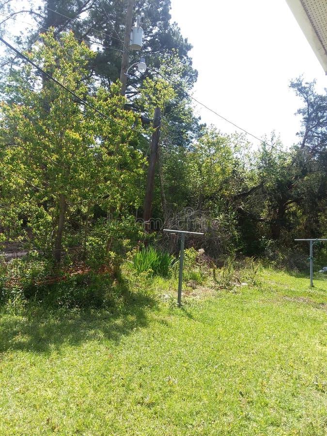Las W Mój podwórku obraz stock