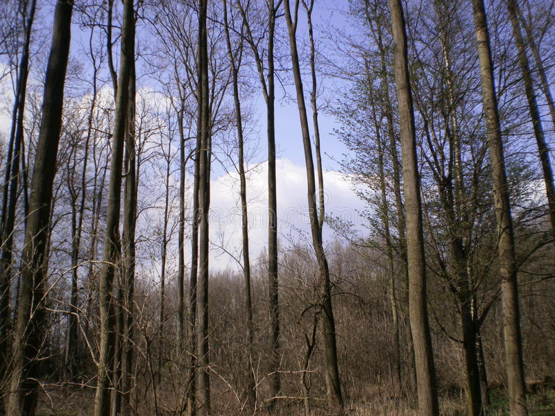 Las w naturze obrazy royalty free