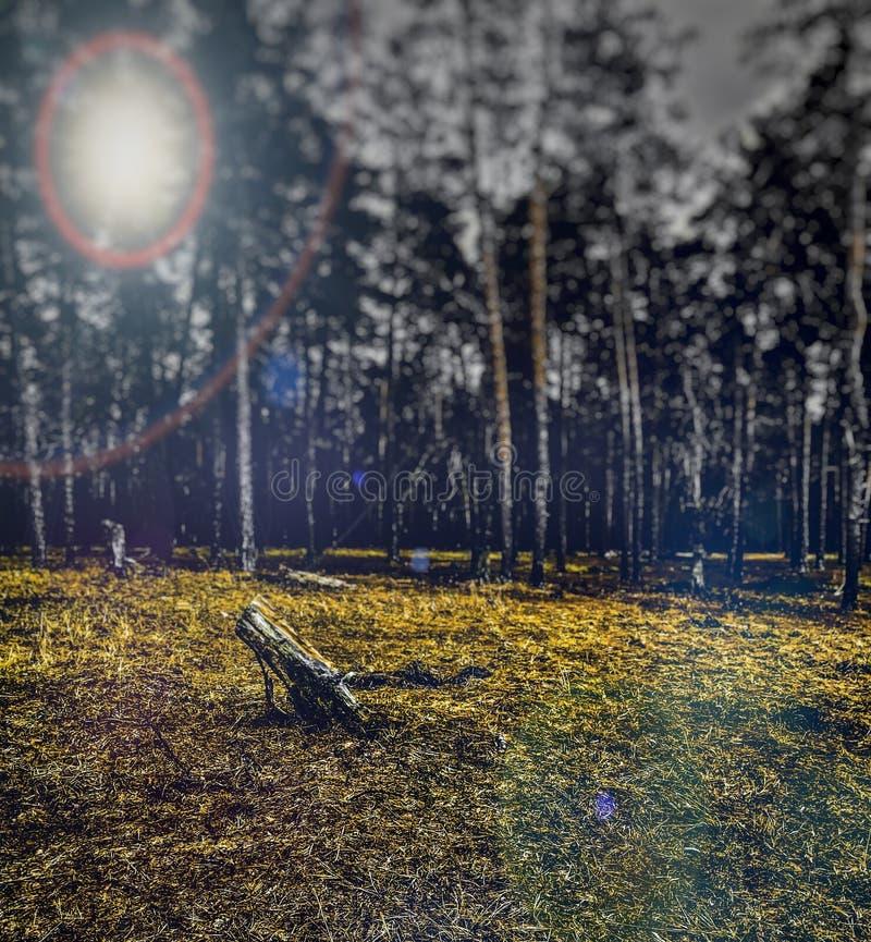 Las w plamie zdjęcia stock
