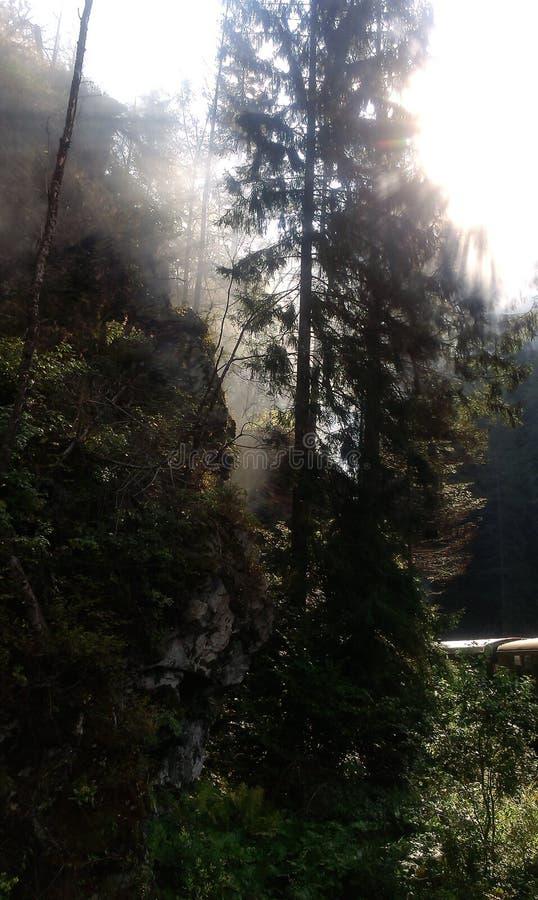 Las w ranek obraz stock