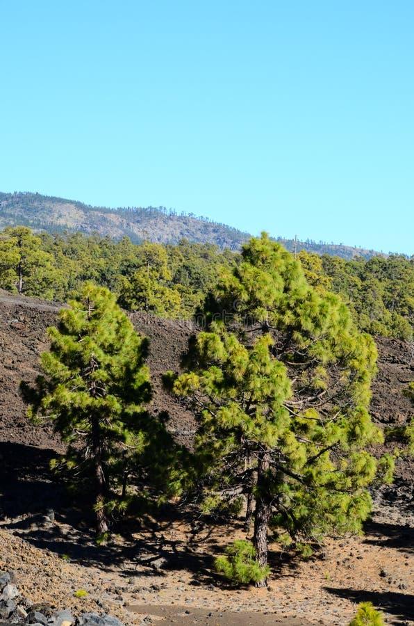 Las W Teide parku narodowym Tenerife obraz stock