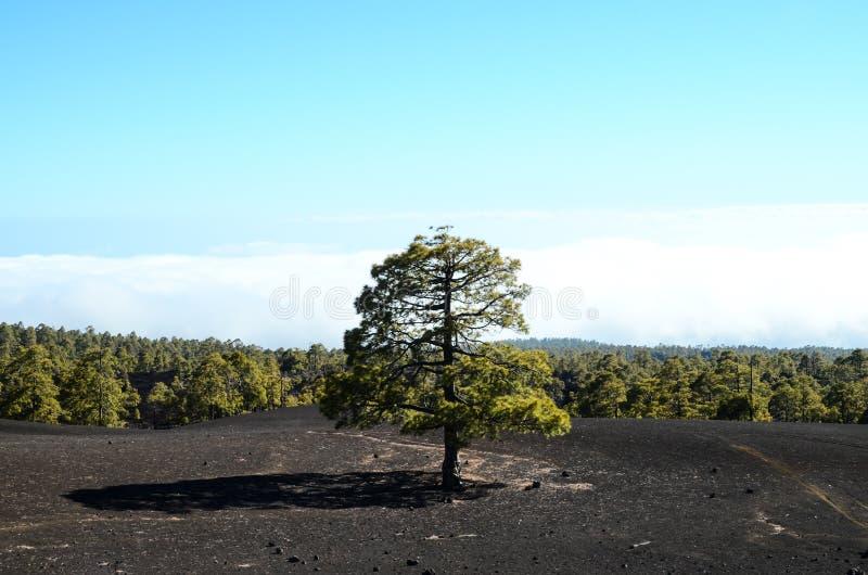 Las W Teide parku narodowym Tenerife zdjęcia stock