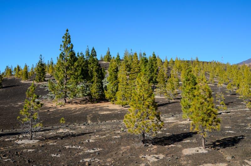 Las W Teide parku narodowym Tenerife fotografia royalty free