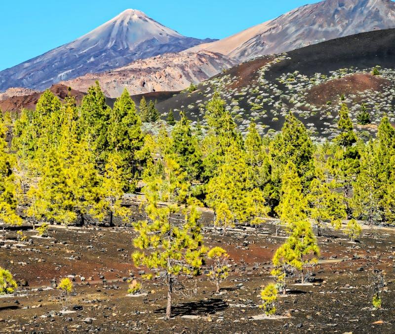 Las W Teide parku narodowym Tenerife obrazy stock