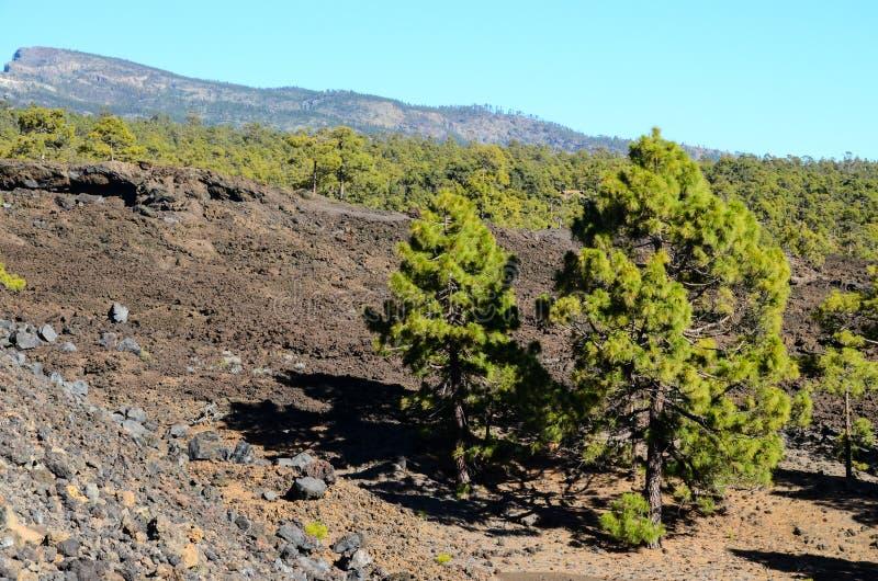 Las W Teide parku narodowym Tenerife obrazy royalty free