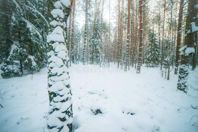 Las w zima czasie zdjęcia stock