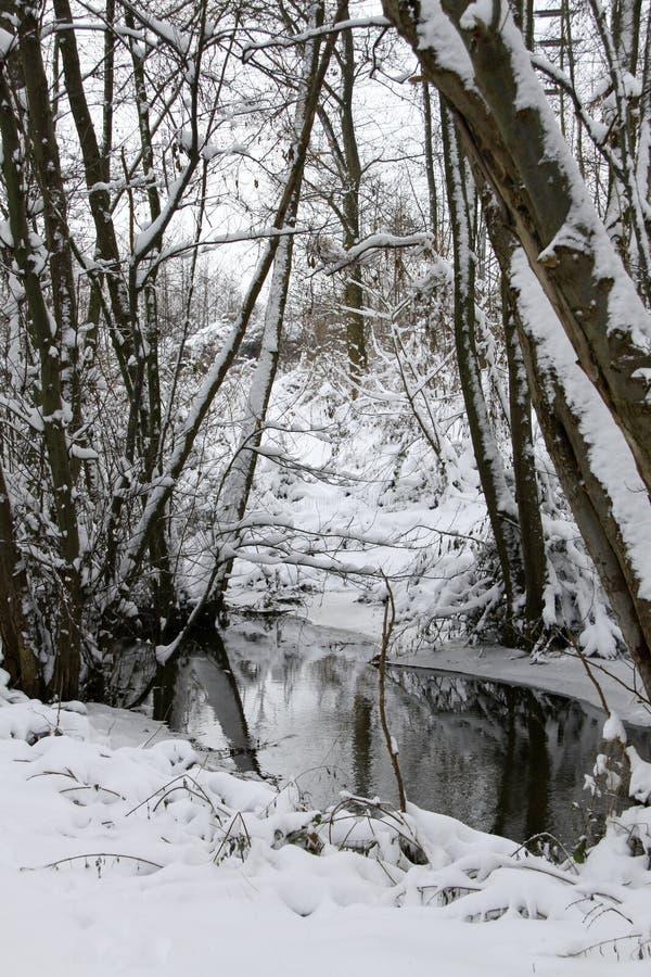 Las w zimie przy zatoczką obrazy stock