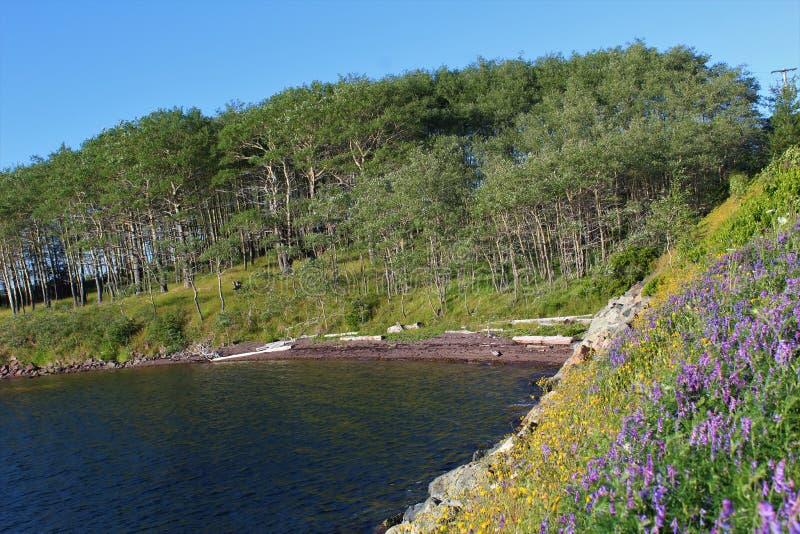 Las wysocy drzewa poza bank pełno wildflowers na brzeg przylądek Bretońska wyspa w nowa Scotia 2 obraz stock