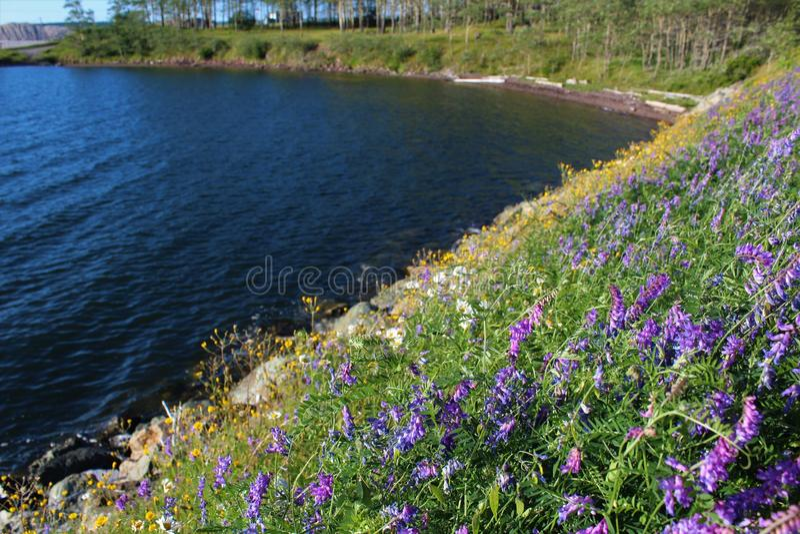 Las wysocy drzewa poza bank pełno wildflowers na brzeg przylądek Bretońska wyspa w nowa Scotia obrazy royalty free